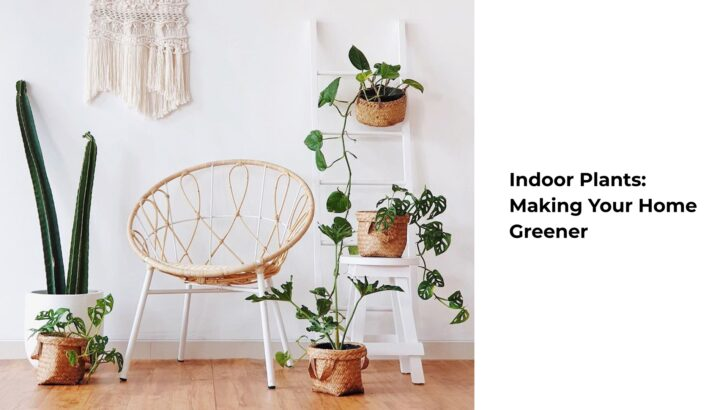 Indoor Plants: Making Your Home Greener